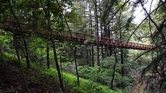 Science Hill Bridge Ⅱ