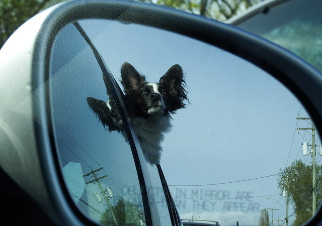 Puppy in the mirror, Fujifilm FinePix S1