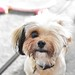 Small photo of doggo