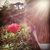 :rose: #roses #red #ProjectRed #tagforlikes #followme #sun #sunshine