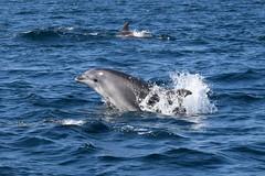 Dolphin Survey trip 10th May 2017