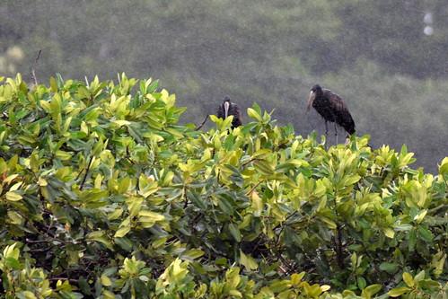 africa uganda jinja idindha sourceofthenile wildlife bird lake victoria stork nalubaale