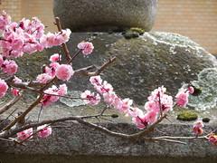 jap 2013 iga-ueno 075