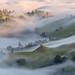 Fog Stream by michael ryan photography