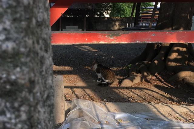 Today's Cat@2017-05-12