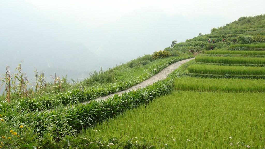 Rice fields, Topas Ecolodge, Lao Cai Province, Vietnam