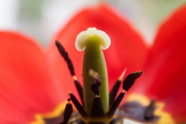 small_file_olsen art flower