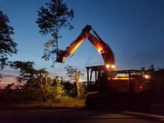 Abattage d'arbres, la nuit