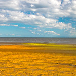 Sunshiny Bay