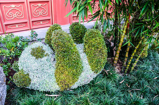 Baby Panda topiary Epcot FG