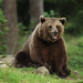 Brown Bear (Jonathan Mercer)