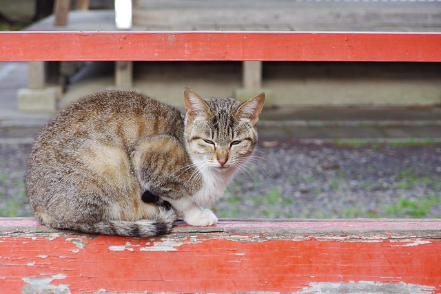 Today's Cat@2017-04-27