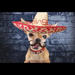 Happy Cinco de Mayo all of us here at NCG!