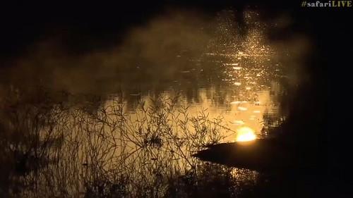 djuma sunrise mist water gold reflections safarilive 7dwf