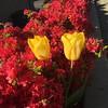Spring is still lingering...