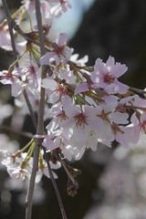 金, 2017-04-14 14:51 - New York Botanical Garden (Bronx)