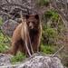 IMG_3914 black bear by starc283