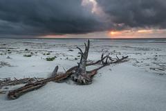 Our Island Getaway - Cumberland Island, GA