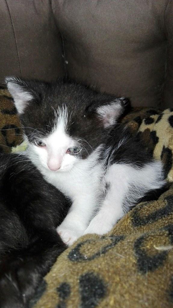 7 Katzenbabies und ihre Mutter
