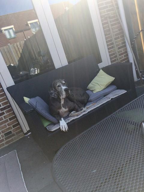 Deense Dog op tuinbank