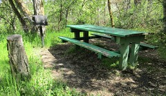 Picnic table in Woodland Park