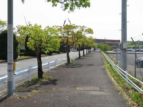 佐賀競馬場へ向かう道
