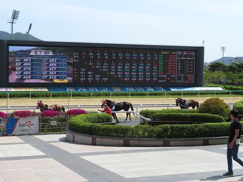 釜山慶南競馬場のレースを終えた馬