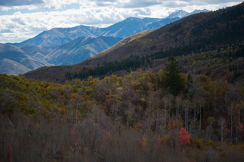 autumn landscape nature travel mountain roadtrip blue mountains red tree fall utah