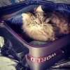 """""""You're not going without me"""" The face says it all #catsofinstagram"""