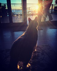 Ahhhh.....we all need the sun. :-) #everett #sunset #cat #catsofinstagram #everettsunsets #pnw #pnwonderland #dayinthelife #friluftsliv #homesweethome #silhouette #light #glowy #canigooutside #liveineverett #nweverett