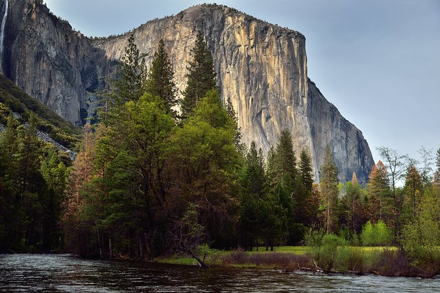 Late Afternoon Sunlight on the Face of El Capitan (Yosemite National Park)