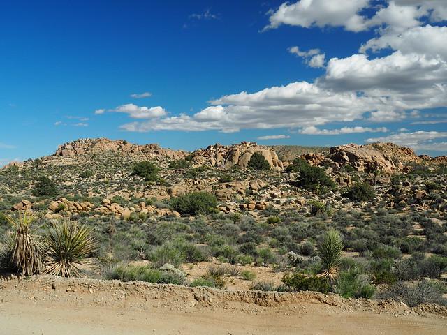 Q3256844 Joshua Tree National Park Desert Queen Mine area