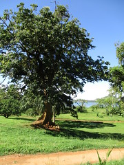Entebbe, Uganda - Entebbe Botanical Gardens