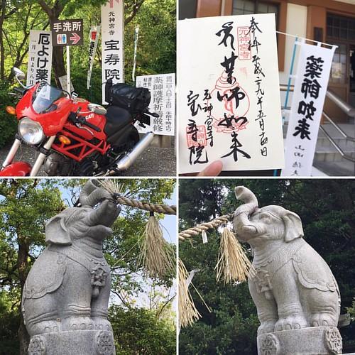 宝寿院さんで御朱印頂きました〜!狛犬ならぬ狛象さん! #japanese #temple #temple #gosyuin #ducatimonster #ducati #御朱印