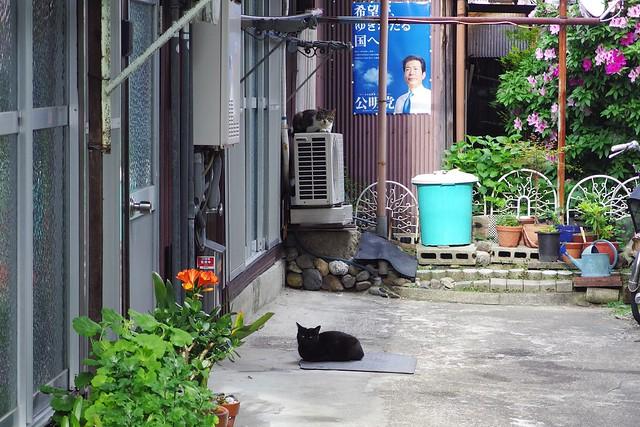 Today's Cat@2017-05-04