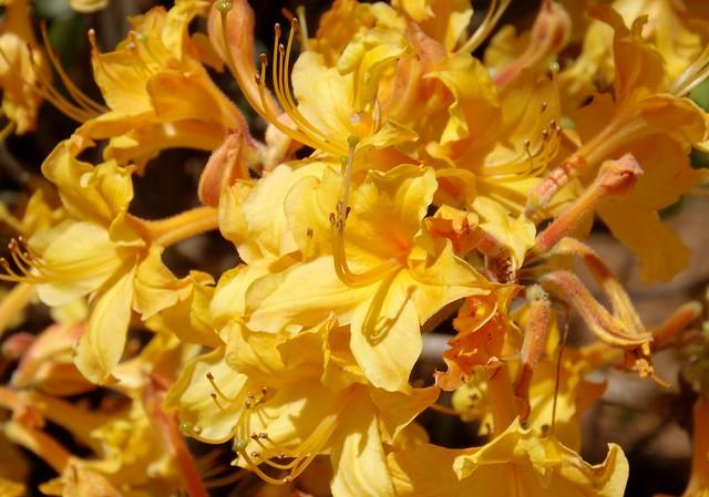 Mellow Yellow, Fujifilm FinePix S4080