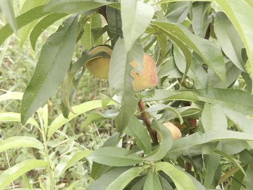 Aspecto da Recomposição Florestal (DEZ 2015)