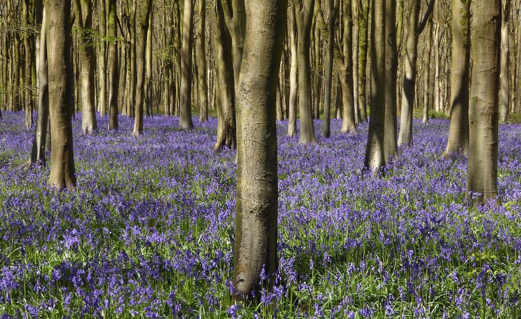 West Wood, near Lockeridge, Wiltshire