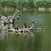 Small photo of Birds on a lake