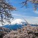 2017 Fuji and Sakura by shinichiro*