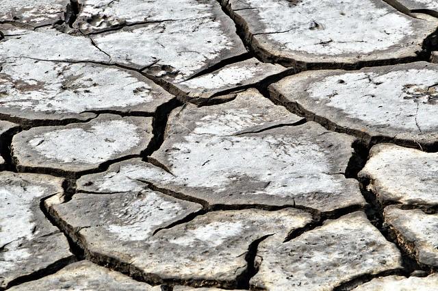 Siccità in padule - Drought in swamp