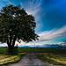 mktphotoflickr-1.jpg by roswellsgirl