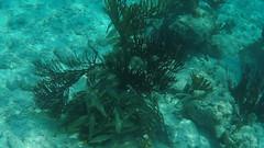 Belize Snorkeling-012.jpg