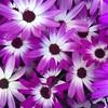 Hope in bloom...