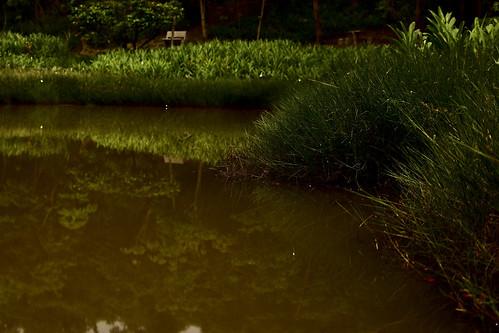 翠湖-螢火蟲-倒影