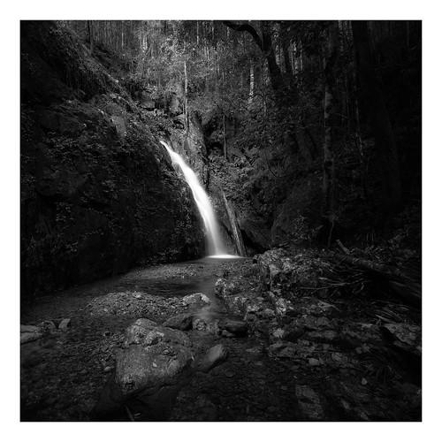 Callicoma Falls VIII
