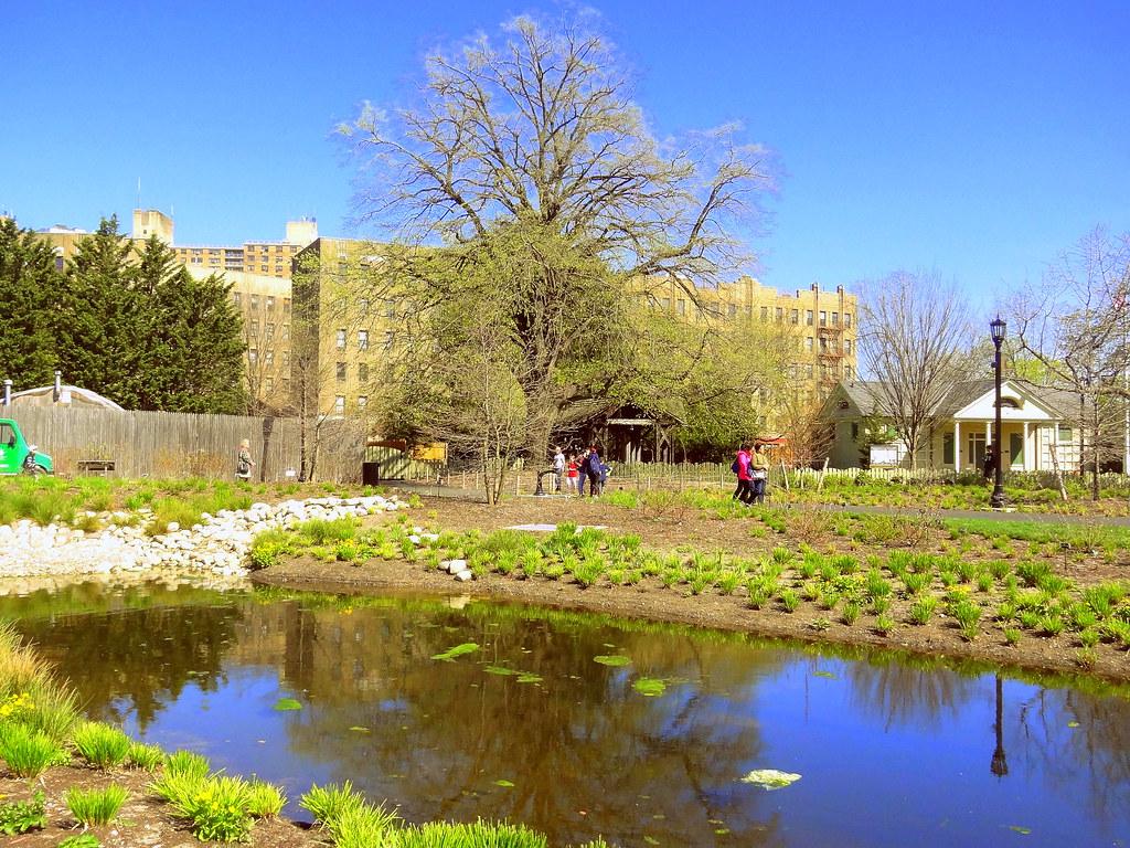 Prospect Park Duck Island