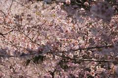 金, 2017-04-14 14:43 - New York Botanical Garden (Bronx)