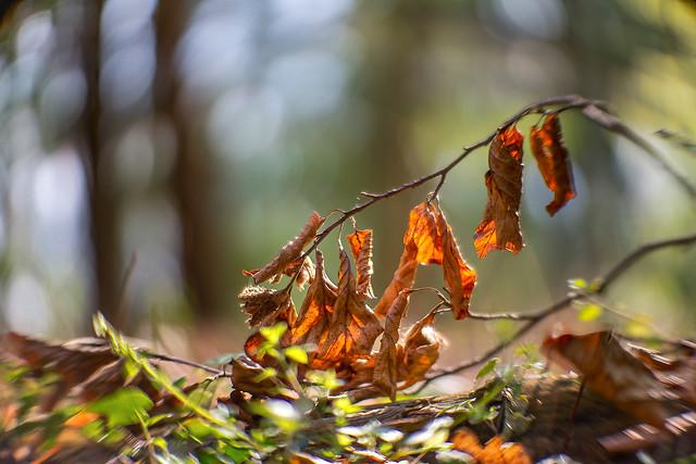 Magic forest floor...