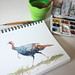 Turkey Sketch by brianjarrellart